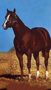 2013 HOF Horse - Two Eyed Jack