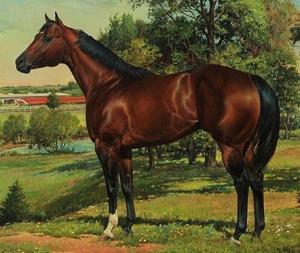 2014 HOF Horse - Te N Te