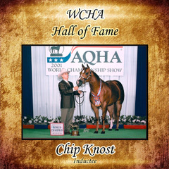 <strong>Chip Knost</strong>